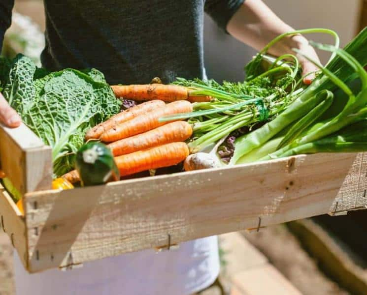 14 Sustainability Tips from Dietitians for Earth Month