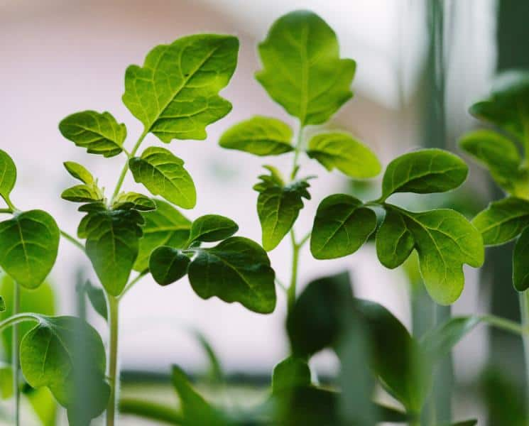 4 Foods You Can Grow Indoors