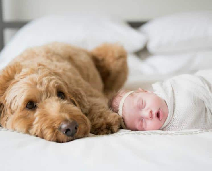 Can Sleeping with Your Dog Improve Your Shut-Eye?